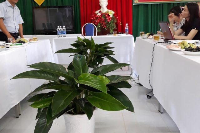 Trường MN Bình Minh đón đoàn kiểm tra trường chuẩn quốc gia mức độ 1 sau 5 năm